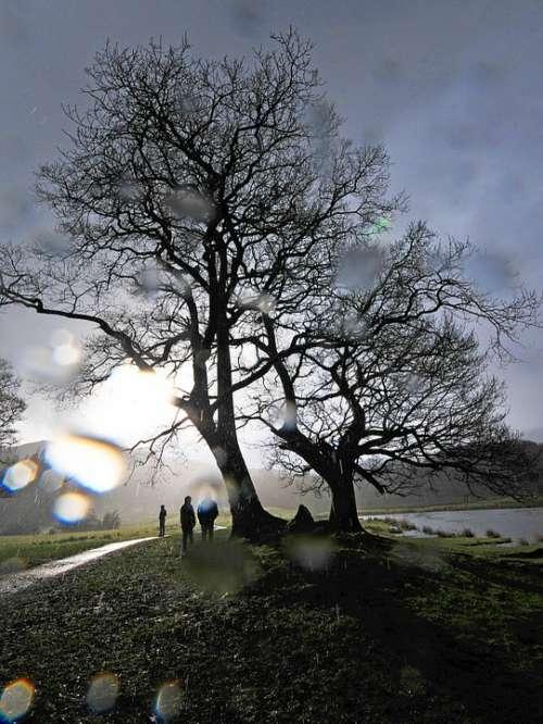 Tree Rain Cumbria Weather Water Wet Nature