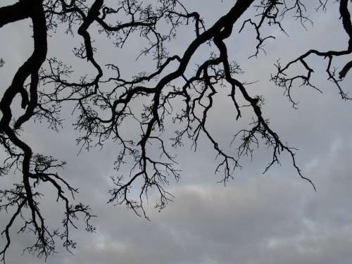 Tree Branches Outdoor Seasonal Winter Bare