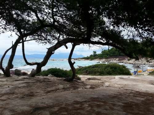 Tree Coast Sea Greece