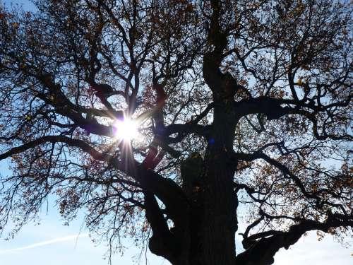 Tree Autumn Mood Backlighting Nature Autumn