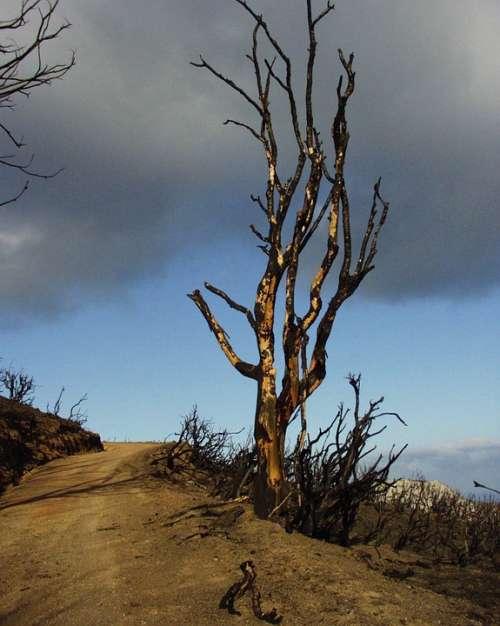 Tree Burned Landscape Sky Weather Fire Greece