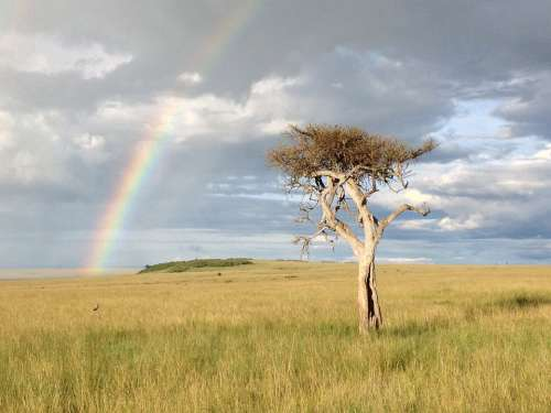 Tree Rainbow Savannah Africa