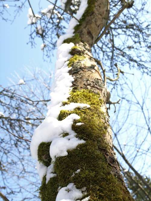 Tree Tribe Winter Snow Log Aesthetic Cold Bark