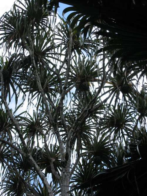 Tree Pattern Plant Tropical Exotic Backlighting
