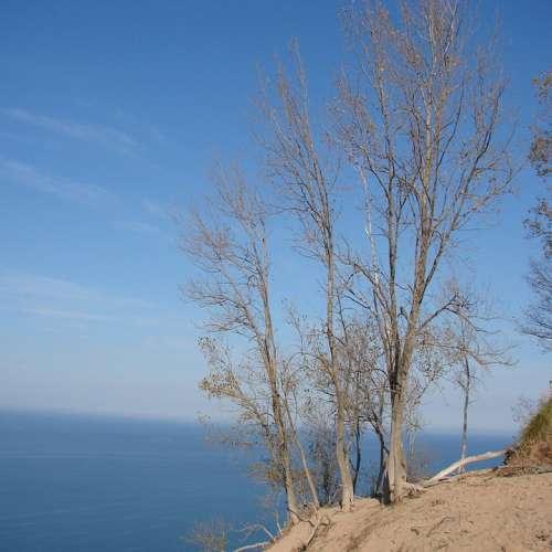 Tree Bare Fall Beautiful Sand Water Michigan