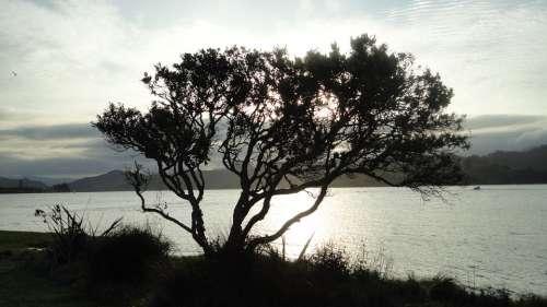 Tree Water Sky Landscape Trees