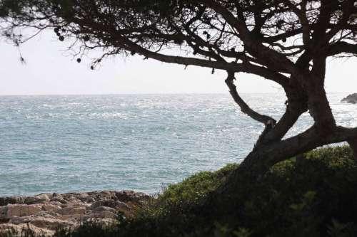 Tree Mallorca Autumn Font De Sa Cala Vacations Sea