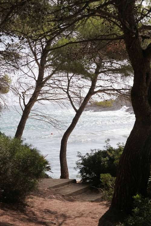 Tree View Sea Island Mallorca Autumn Nature