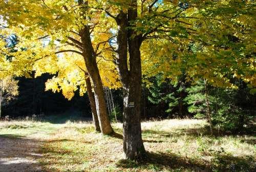 Tree Autumn Fall Foliage Nature