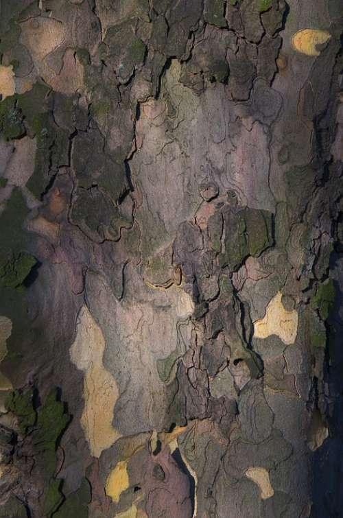 Tree Bark Bark Tribe Nature Landscape Pattern