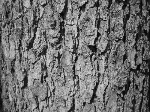 Tree Bark Bark Tree Texture Black And White