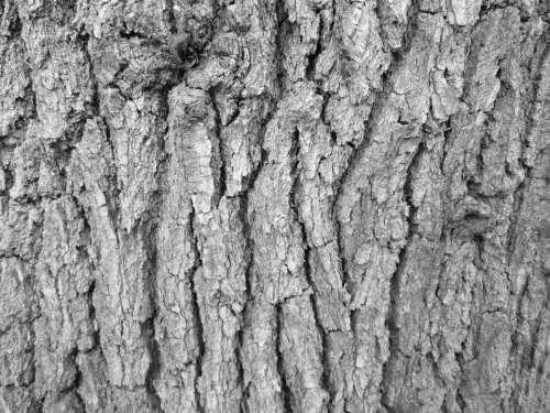 Tree Bark Bark Tree Texture Nature Vegetation