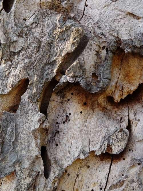 Tree Bark Tree Structure Bark Close Up Rau