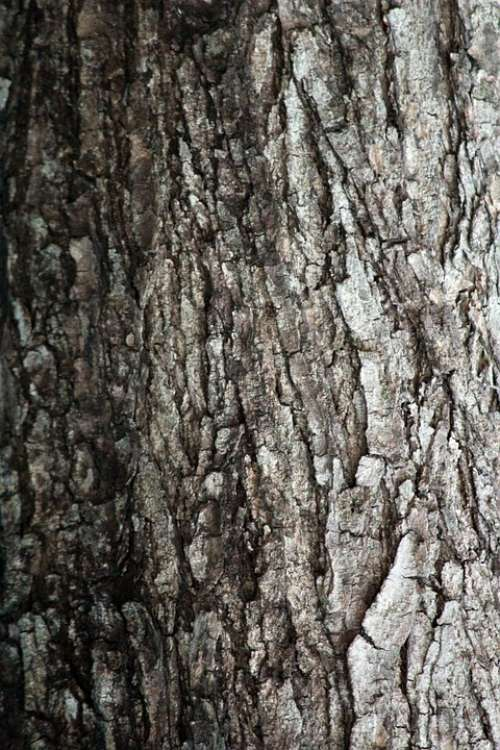 Tree Bark Texture Tree Woody Texture Background