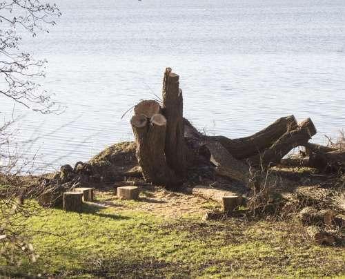 Tree Stump Tree Tree At The Lake Wood Saw Firewood