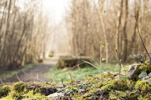 Tree Stump Moss Green Forest Undergrowth