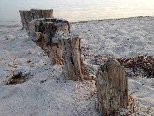 Tree Stump Nature Wood Trunk Sand Beach Poles