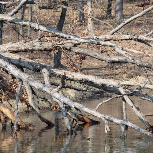 Tree Water Toppled Fell Over Spring Lake