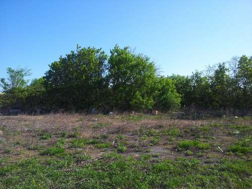 Trees Tree Grass Corn Grass Tall Grass Sky Blue