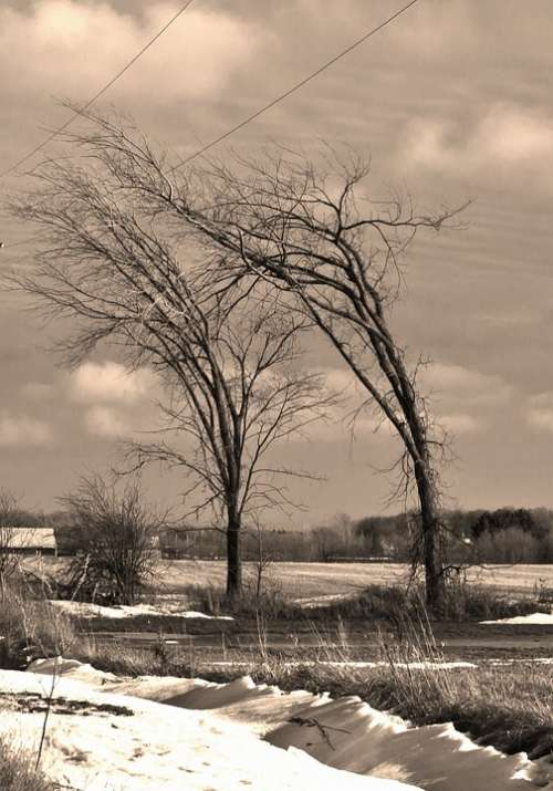 Trees Wind Winter Sepia