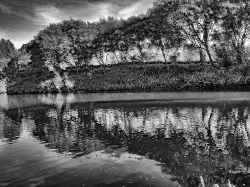 Trees Black And White Nature Lake