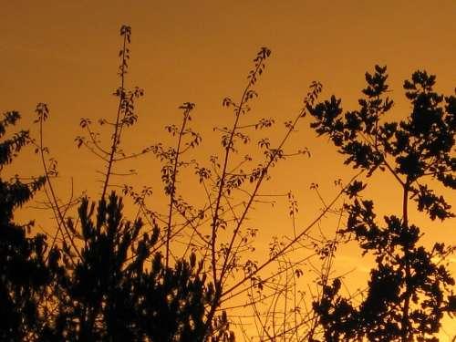 Trees Evening Sky