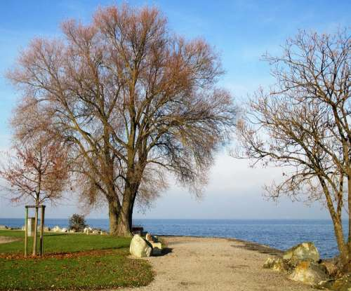 Trees Rest Romanshorn Lake Constance Lake Leaves