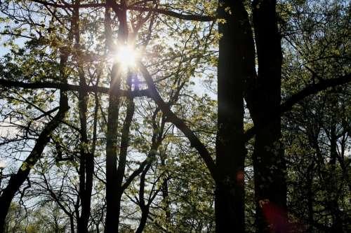 Trees Foliage Green Park Sun Penetrating