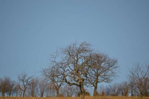 Trees Sky Blue Forest Nature Grass Sun