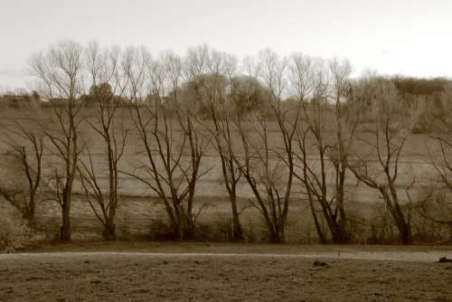 Trees Landscape Trist Autumn Winter Loneliness