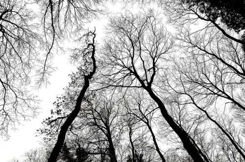 Trees Branches Forest Sky
