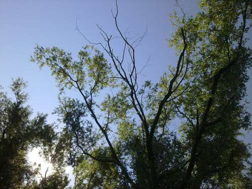 Trees Sky Landscape