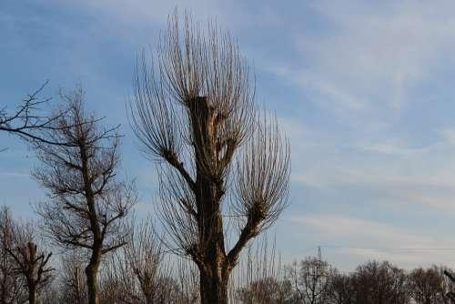 Trees Tree Kahl