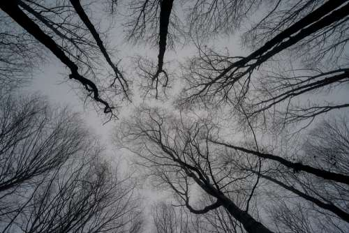 Trees Sky Nature Winter Branches Fog Look At Sky