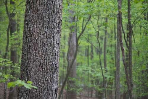Trees Hardwood Forest Landscapes Nature
