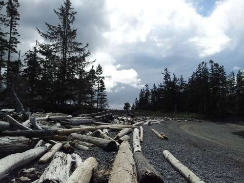 Trees Wood Driftwood Nature Forest Sky Travel