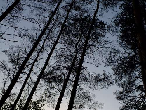 Trees Silhouette Summer Sky