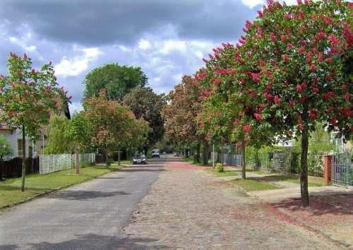 Trees Road Autumn Nature