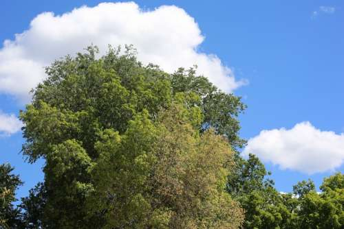 Trees Nature Plants Outdoors Green Calm Leaves