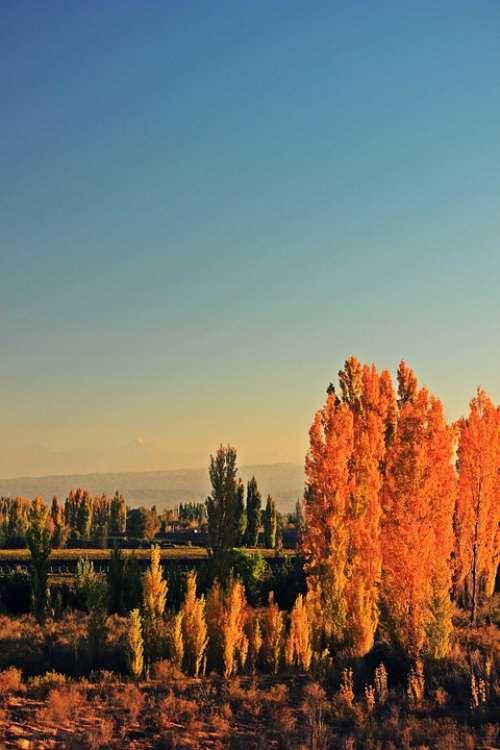 Trees Tree Autumn Leaves Landscape Nature Sky