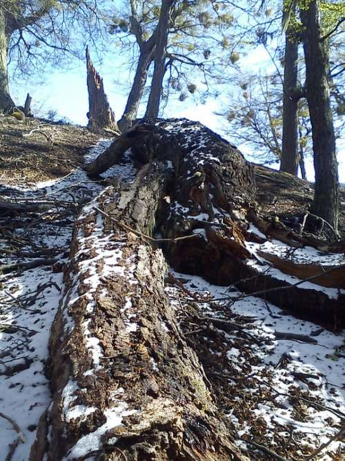 Trees Fallen Mountain Winter Snow