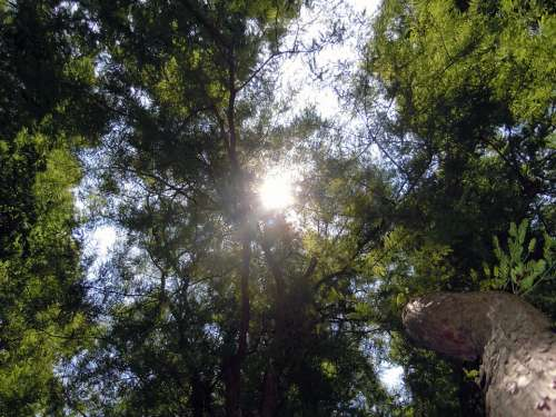 Treetop Trees Backlighting Ray Of Hope Sun Forest