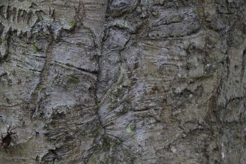 Tribe Bark Close Up Structure Texture Tree Wood