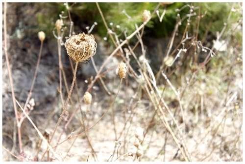 Trockenblume Faded Dry Composites Flower Straw