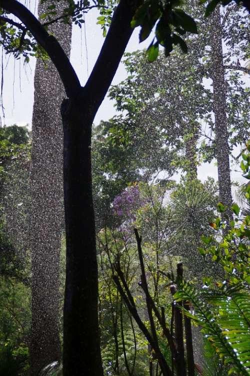 Tropics Rainforest Rain Trees Drip Green Leaves