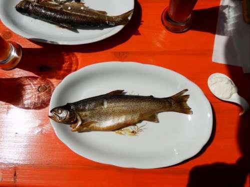 Trout Smoked Smoked Fish Sat Plate Fish