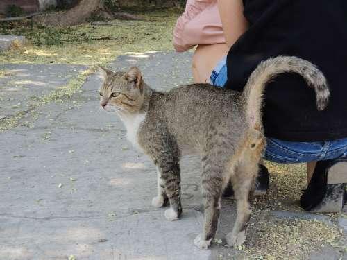 Turkey Izmir Cat Tigercat Alley Cat Cat Face