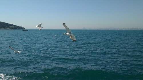 Turkey Istanbul Büyük Ada Gulls Wave Water