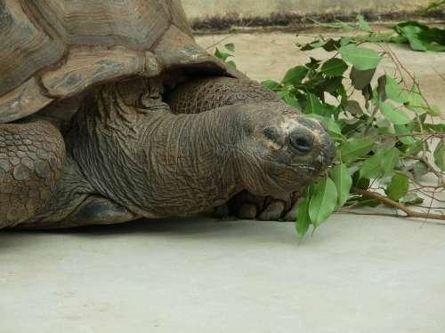 Turtle Animal Water Creature Giant Tortoise Zoo