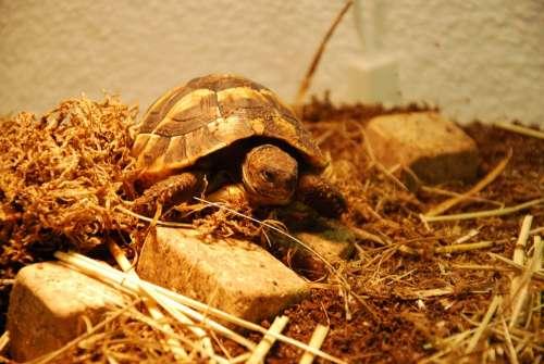 Turtle Water Creature Animals Tortoise Shell